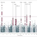 Identification of risk loci with shared effects on five major psychiatric disorders: a genome-wide analysis
